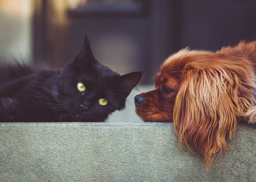dog, cat, pets